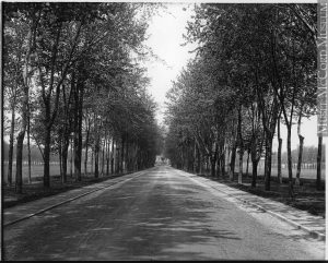 wide road through an avenue of trees